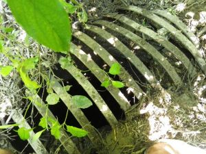 An Ontario sinkhole